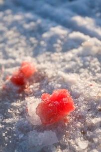 狩猟の血に染まった雪の写真素材 [FYI02672804]