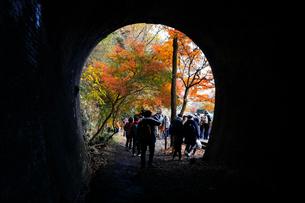 12月 紅葉の愛岐トンネル群 近代化産業遺産の写真素材 [FYI02672841]
