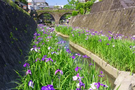 高瀬裏川花菖蒲祭りの写真素材 [FYI02672860]