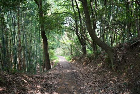 当尾石仏の道の写真素材 [FYI02672873]