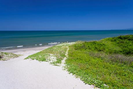 初夏の吹上浜の写真素材 [FYI02672912]
