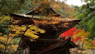 11月 紅葉の大矢田(おやだ)神社 -美濃の天然記念物-の写真素材 [FYI02672942]