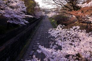 3月 琵琶湖疏水インクラインの桜の写真素材 [FYI02672943]