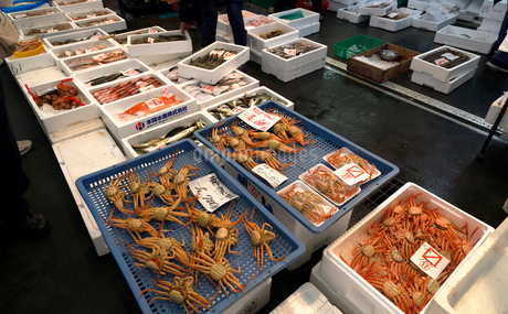 11月 魚市場-冬の北陸-の写真素材 [FYI02672954]