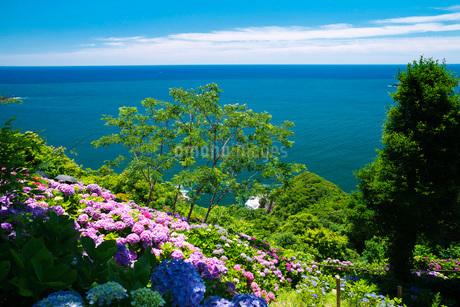 桃源郷岬のアジサイと日向灘の写真素材 [FYI02672964]