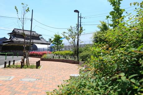 土支田ハンカチの木緑地の写真素材 [FYI02672981]