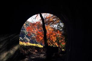12月 紅葉の愛岐トンネル群 近代化産業遺産の写真素材 [FYI02673012]