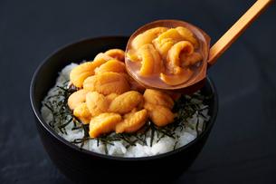 うに丼の写真素材 [FYI02673043]