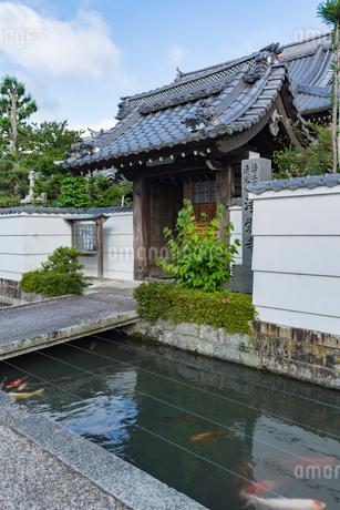 五個荘金堂の町並み,浄栄寺と水路に泳ぐ鯉・タテ写真の写真素材 [FYI02673108]