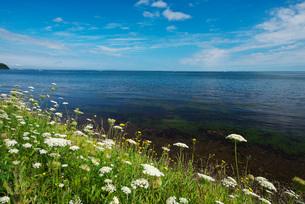 サロマ湖と野の花の写真素材 [FYI02673119]