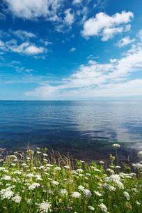 サロマ湖と野の花の写真素材 [FYI02673121]