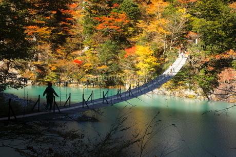 11月 夢の吊橋 紅葉の寸又峡の写真素材 [FYI02673143]