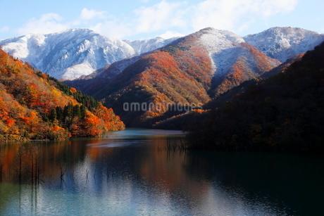 11月 紅葉と雪景色の徳山ダムの写真素材 [FYI02673184]