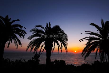 フェニックスと日南海岸の日の出の写真素材 [FYI02673240]