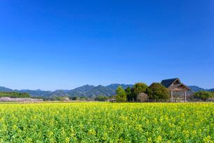 春の西都原公園の写真素材 [FYI02673297]