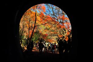 12月 紅葉の愛岐トンネル群 近代化産業遺産の写真素材 [FYI02673329]