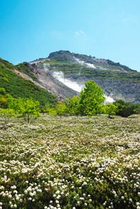 硫黄山とエゾイソツツジの写真素材 [FYI02673352]