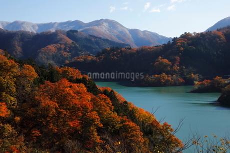 11月 紅葉と雪景色の徳山ダムの写真素材 [FYI02673359]