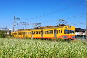 9月 三岐鉄道とそば畑の写真素材 [FYI02673366]