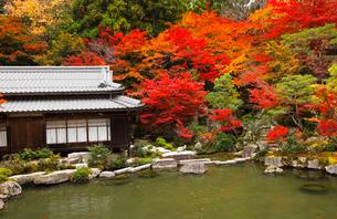 11月秋 紅葉の百済寺 滋賀の秋景色の写真素材 [FYI02673430]