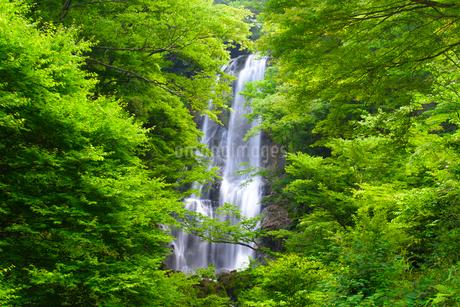 夏の白滝の写真素材 [FYI02673509]