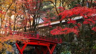 11月 紅葉の横蔵寺-美濃の正倉院-の写真素材 [FYI02673520]