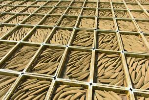 鰹節の天日干しの写真素材 [FYI02673532]