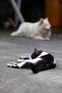 台湾、猫村、ネコとイヌの写真素材 [FYI02673571]