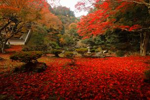 11月 紅葉の徳源院 滋賀の秋景色の写真素材 [FYI02673582]