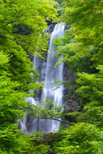 夏の白滝の写真素材 [FYI02673682]