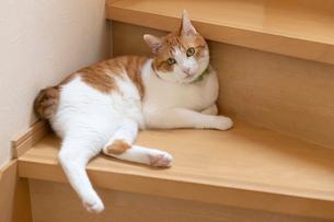 飼い猫の写真素材 [FYI02673703]