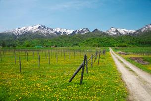 夕張山地とワインぶどう園の写真素材 [FYI02673706]