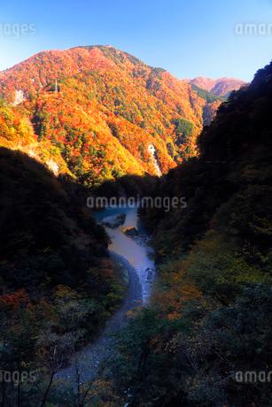 11月 夢の吊橋 紅葉の寸又峡の写真素材 [FYI02673754]