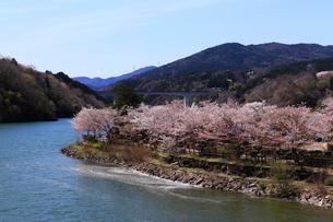4月 桜の恵那峡の写真素材 [FYI02673762]