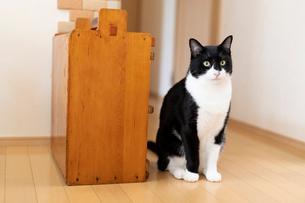 飼い猫の写真素材 [FYI02673820]