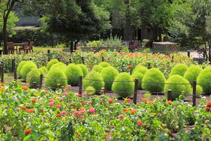 花壇の写真素材 [FYI02673835]