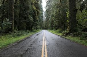 オリンピック国立公園の道路の写真素材 [FYI02673910]