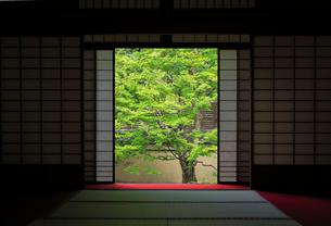 雲龍院 月窓の間の写真素材 [FYI02673911]