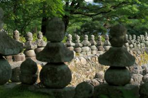 あだしの念仏寺の写真素材 [FYI02674096]