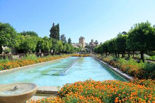 アルカサルの庭園の写真素材 [FYI02674134]