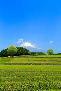 富士山と茶畑の写真素材 [FYI02674289]