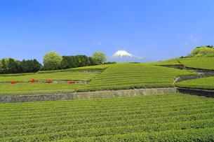 富士山と茶畑の写真素材 [FYI02674477]