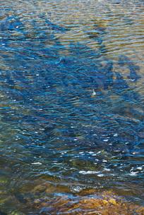 遠音別川とサケ・マスの遡上の写真素材 [FYI02674807]