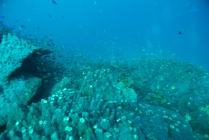 千年サンゴの写真素材 [FYI02674848]