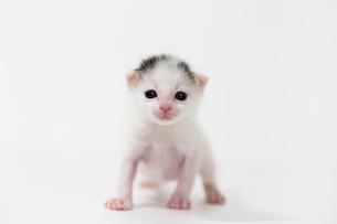 生後2週間の子猫の写真素材 [FYI02675150]