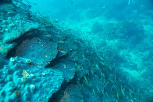 千年サンゴの写真素材 [FYI02675215]