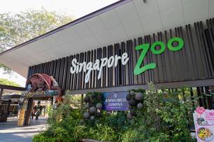 シンガポール動物園の入場ゲートの写真素材 [FYI02675250]
