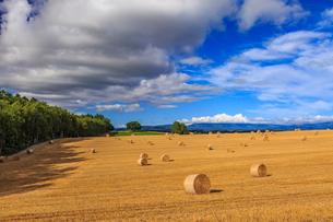 四角い木と麦わらロール転がる美瑛の丘の写真素材 [FYI02675351]