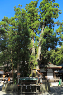 大神神社の写真素材 [FYI02675408]