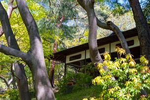 殿ヶ谷戸庭園の春の風景の写真素材 [FYI02675413]